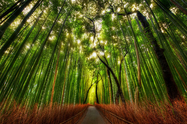 Bamboo Forest - Trey Ratcliff