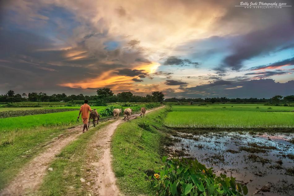 end of the day - Bobby Joshi - India - shepherd