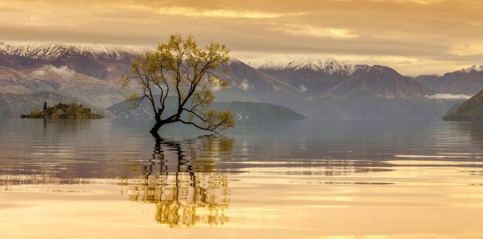 wanaka tree - jason rosewarne - New Zealand