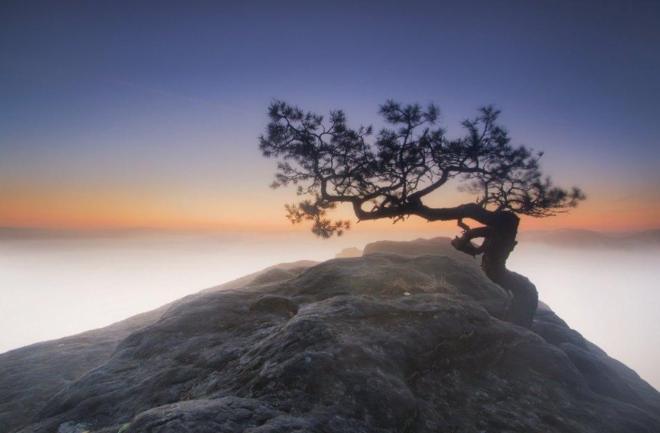 Alone Tree -  Paweł Uchorczak